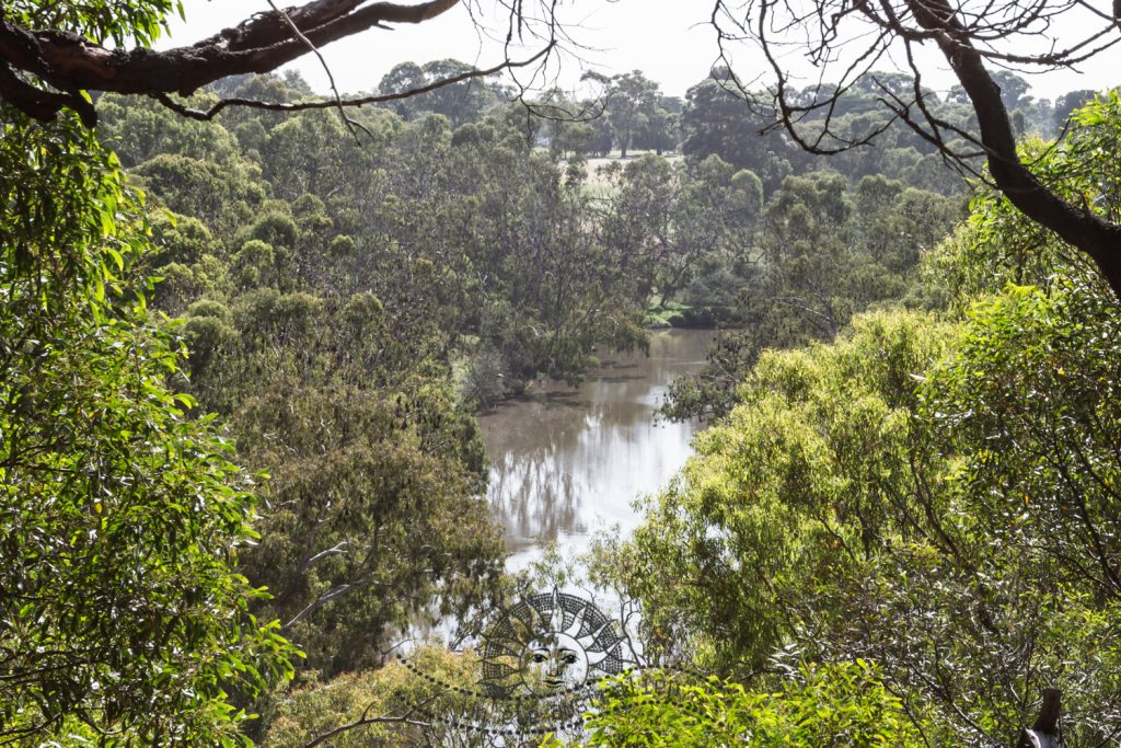 un été australien australie voyage melbourne victoria chauve-souris chauves-souris